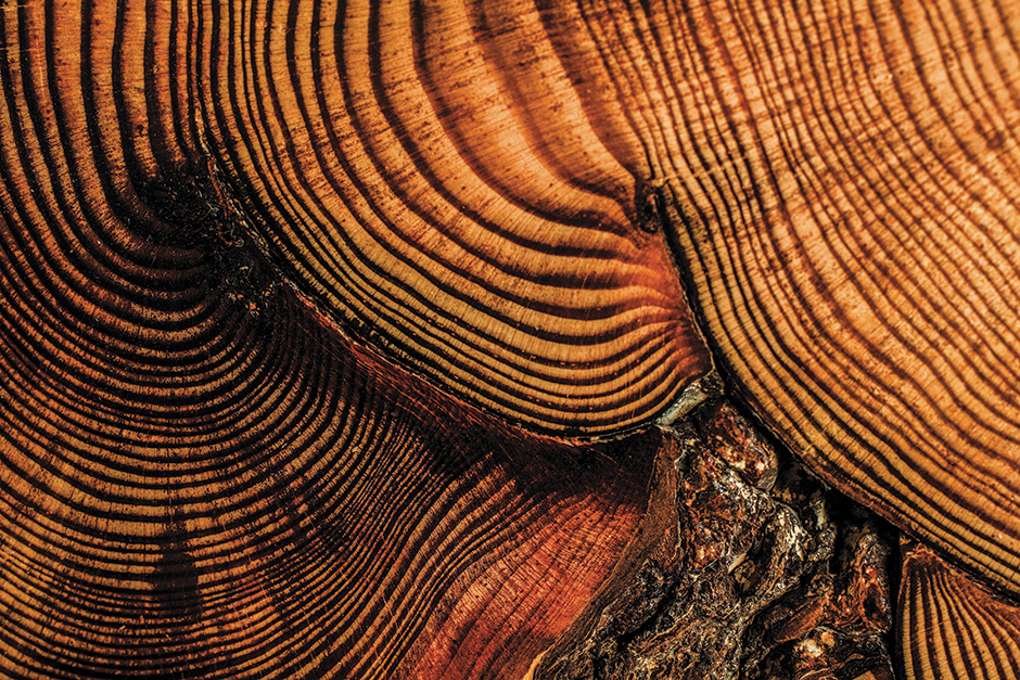 tree-rings-0023_web