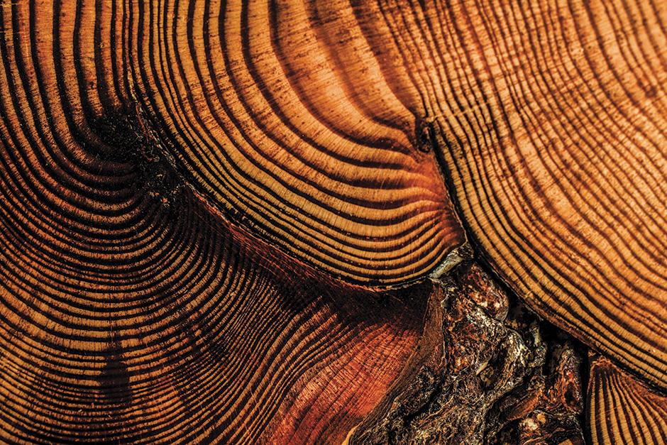 tree-rings-0023_web