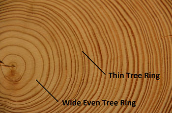 tree_rings_3a