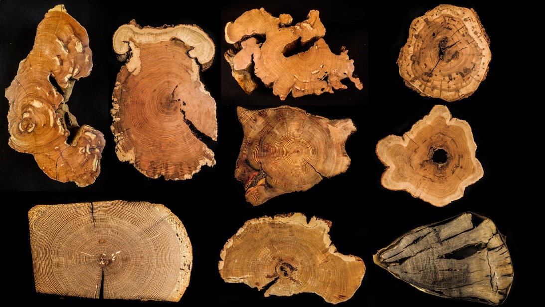 tree_trunks_small