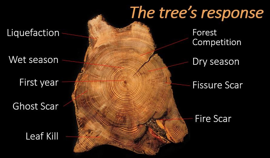 trees_response